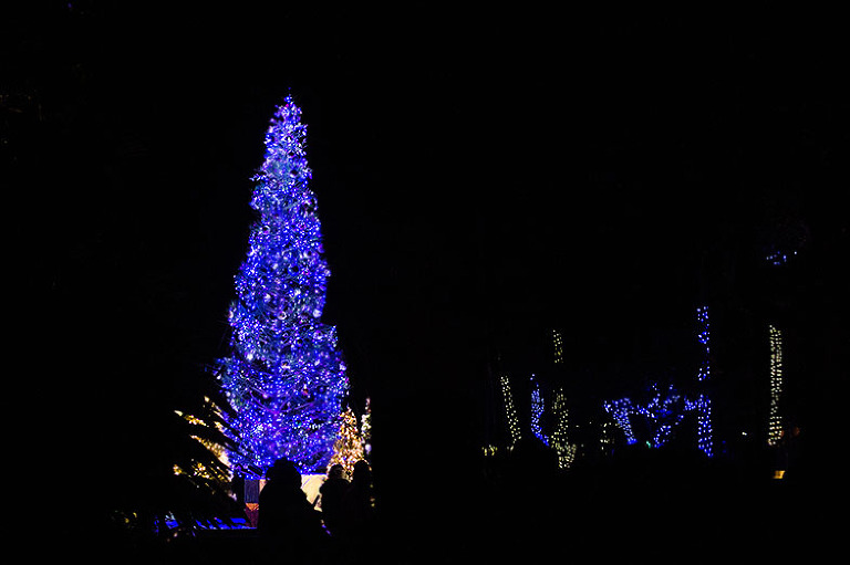 sarah_querido_photography_Christmaslagoon_2